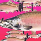 Salmon of Capistrano