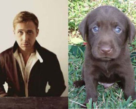 Ryan Gosling or a Puppy?